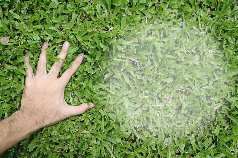 Directly above view of hand touching grass