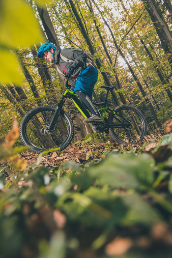 Person riding bicycle in forest