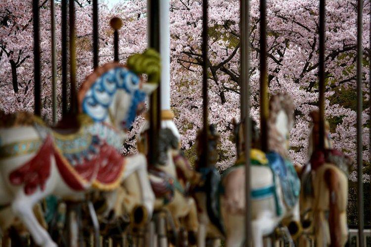 Sakura 東武動物公園 Spring Flowers Springtime Taking Photos Hello World OpenEdit Landscape