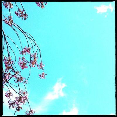 The skies have been great today. Hipstamatic Hornbecker Blankonoir