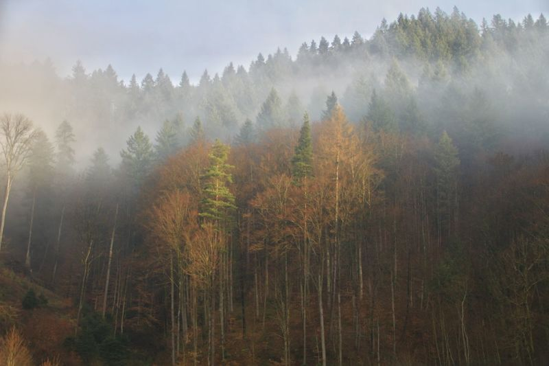 Nature Forest Fog Landscape Springtime Morning Beauty In Nature Environmental Conservation Sunlight Beauty Mountain Outdoors Condensation Tree Plant Scenics Sunset Black Forest Germany Canon700D EOS700D Schwarzwald Trees And Nature Idyllic Canon Nature