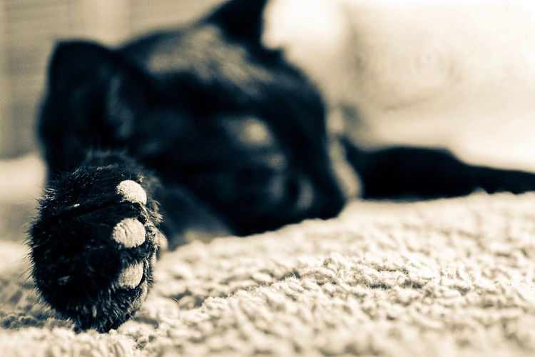 Focus Animal Close-up Paw Cat Cat Lovers Cats Of EyeEm Cat Photography Domestic Animals Beauty Tranquility Focus On Foreground Blanket Soft Soft Focus Black Cat Photography EyeEmNewHere Pet Portraits