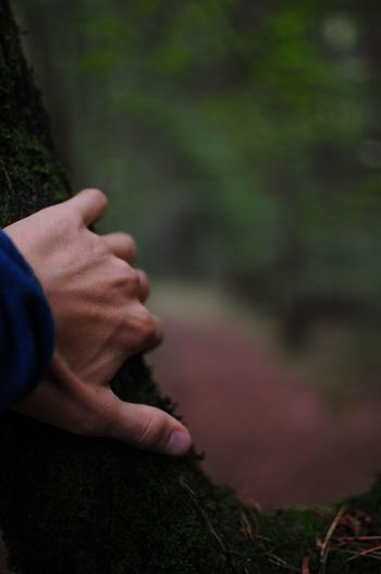 Close-up of person hand holding plant