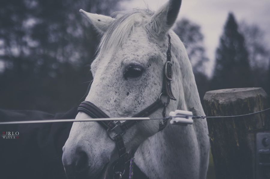 EyeEm Selects Horse Domestic Animals Animal Animal Themes Outdoors Livestock Day Cold Temperature Close-up Relaxing Taking Photos Pentax K3_ii Landscape Germany Traveling Time Enjoying Life Photography EyeEm Best Shots EyeEm Nature Lover Eye4photography  EyeEm EyeEm Gallery EyeEmBestPics