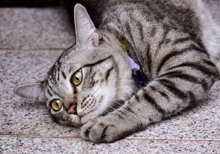 High angle view of tabby cat