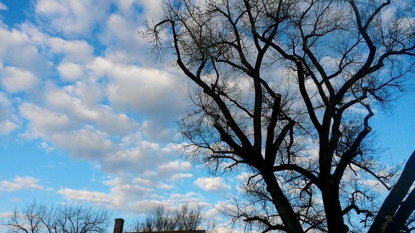 Sky Cloud - Sky Tree Low Angle View Nature Outdoors Day No People Water Beauty In Nature