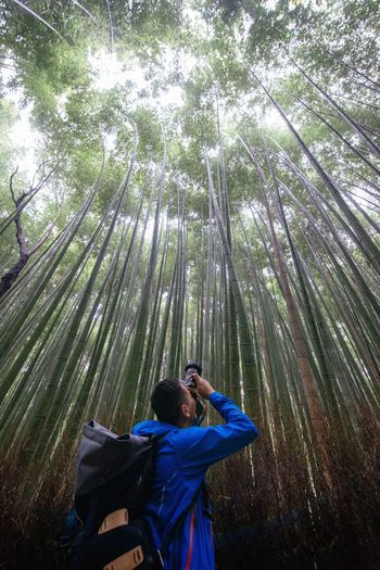 Low angle view of man photographing in bamboo groove