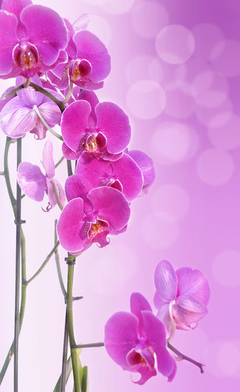 Beauty In Nature Blossom Blur Lights Flower Flower Head Flowering Plant Freshness Growth Inflorescence Nature Orchid Pink Color Plant