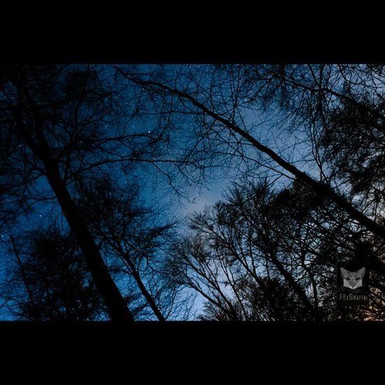Sternenhimmel über den Bäumen / Starry Sky over the trees Sternenhimmel Sterne  Niedersachsen Salzgitter Deutschland Fotografie Starrysky Starrynight