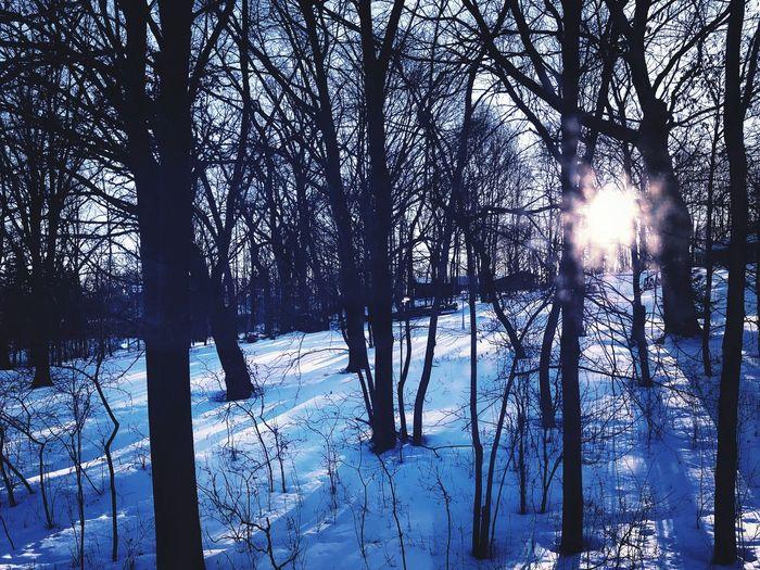 Winter woods.