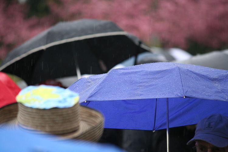 Close-up of wet umbrellas