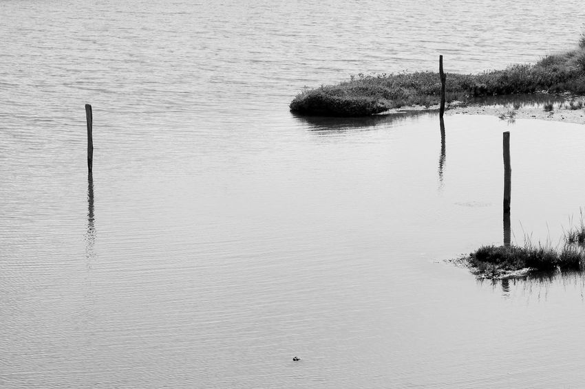 Three Posts Reflected Black & White Beauty In Nature Blackandwhite Day Lake Lymington Nature No People Outdoors Reflection Salterns Tranquility Water Waterfront Wooden Post