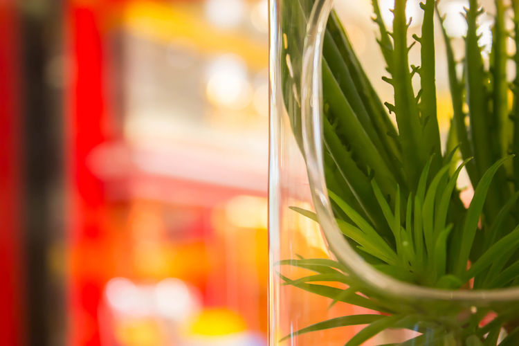 On the Road Close-up Drink Drinking Glass Focus On Foreground Food Food And Drink Freshness Glass Glass - Material Green Color Herb Household Equipment Indoors  Leaf No People Refreshment Selective Focus Still Life Table Transparent