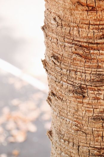 Nature Tree Trunk Textured  Rough Outdoors Close-up No People Tree Bark Beauty In Nature Day Sky
