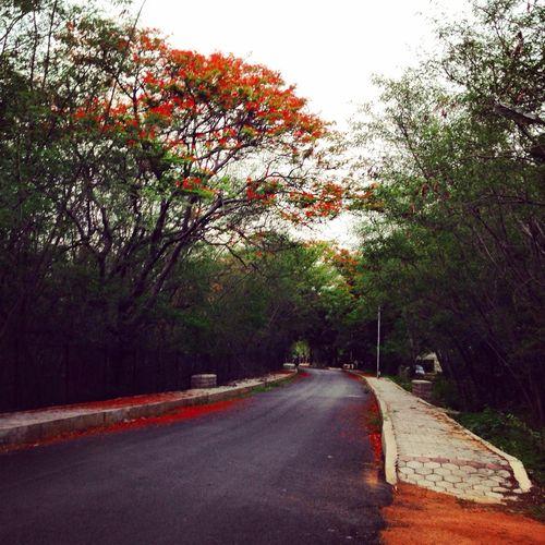 Autumn colours in Hyderabad Hyderabad India Autumn Colors Nostalgia