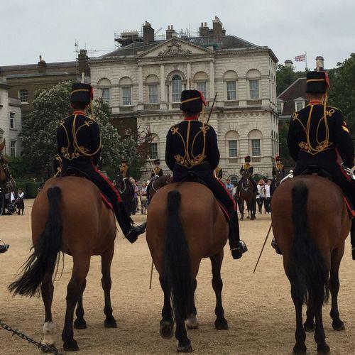 London Lifestyle Horse Working Animal Guards