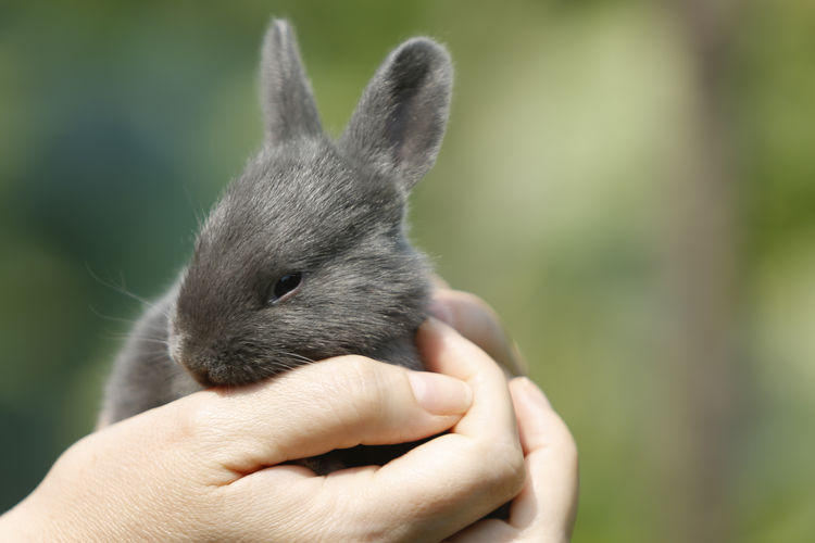 Close-Up Of Hands Holding A Rabbit