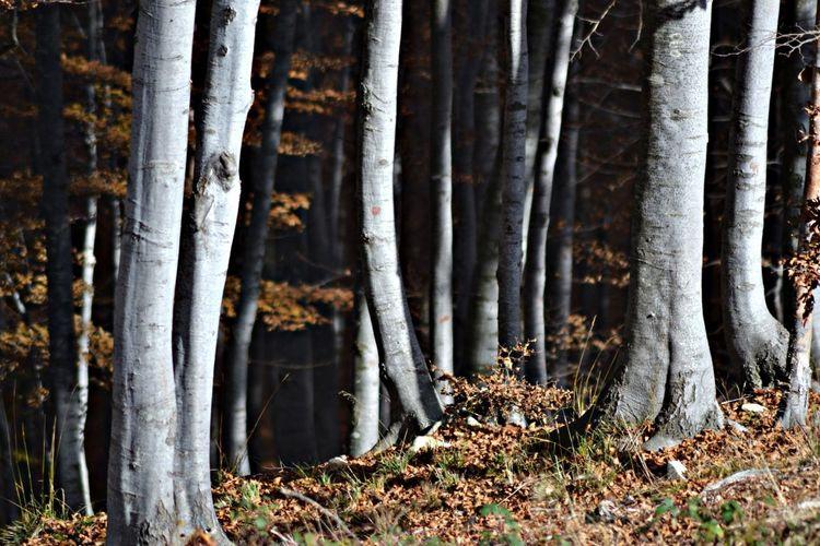 Colors Of Autumn TreePorn