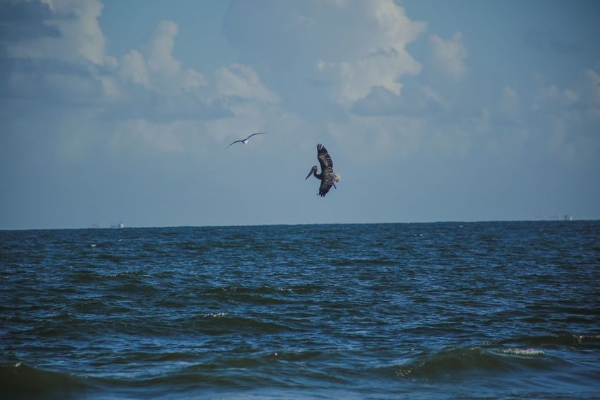 Alabama Fort Morgan Pelican Water Sky Sea Waterfront Cloud - Sky Mid-air Beauty In Nature Horizon Horizon Over Water Scenics - Nature Motion Day Nature Flying Outdoors