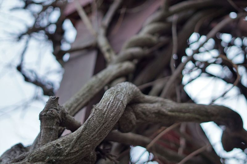Low angle view of tree trunk