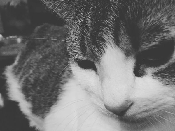 Roxiebaby Sad & Lonely Animal Love Pet Bonds All I Need