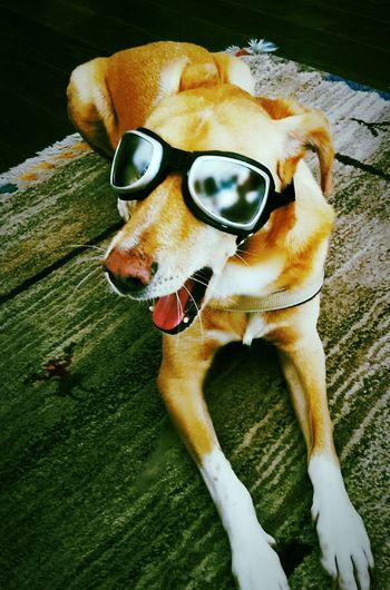 Dogs Dogs Of EyeEm Dogsofinstagram Dogs Life Dogselfie Dogstyle Dogsmiles