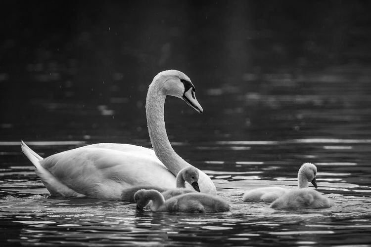 New births Animal Animal Photography Animal Themes Animal Wildlife Bird Birth Nature No People Portrait Young Animal Young Bird The Great Outdoors - 2018 EyeEm Awards