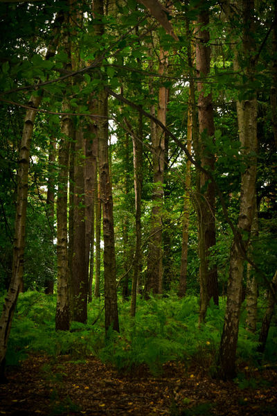 Trees Day Forest Forest Photography Landscape Light And Shade Nature No People Outdoors Tree Walk In The Woods