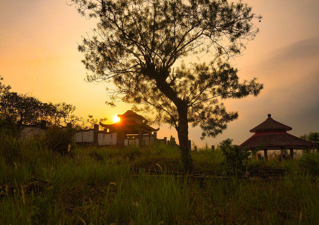 Tree at the Funeral Tree Sunset Architecture Sky Grass Building Exterior Built Structure