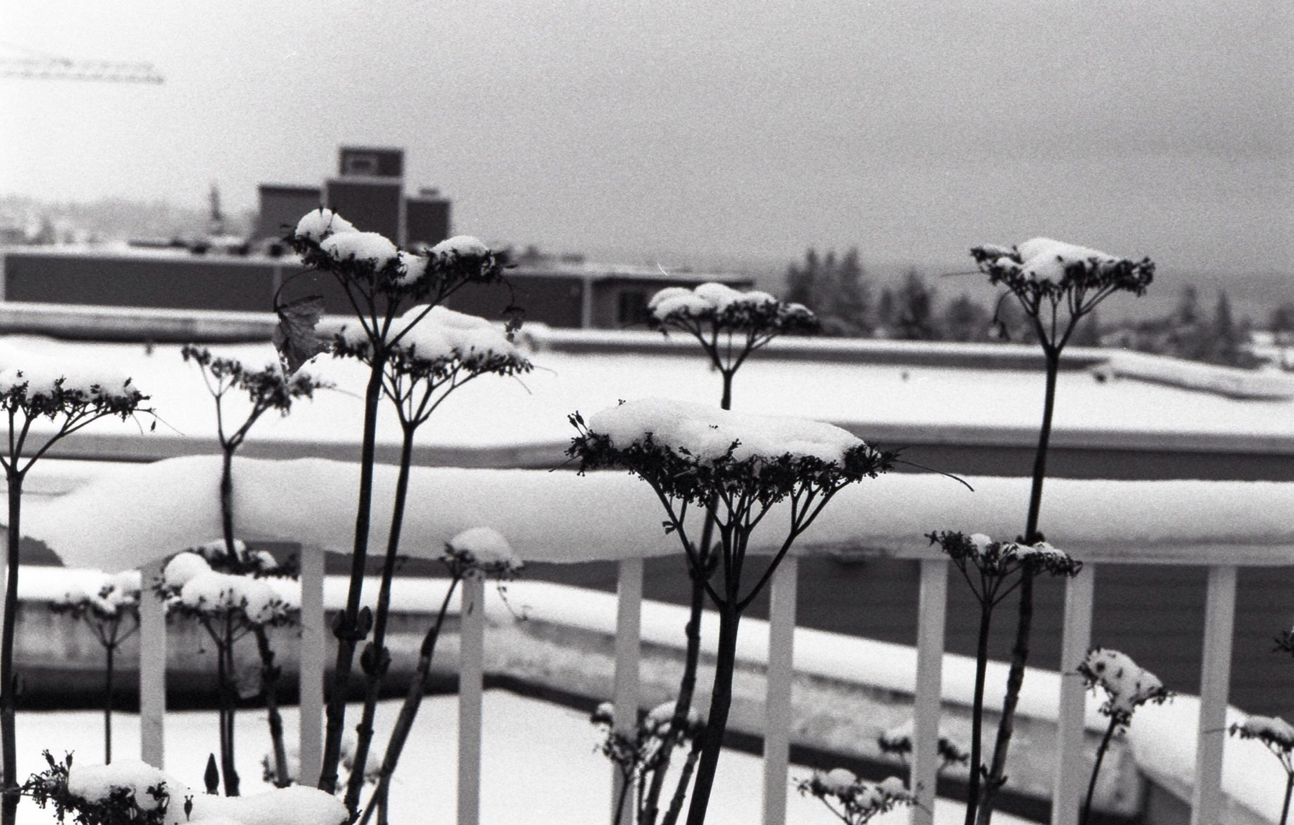 winter, snow, cold temperature, season, railing, weather, water, clear sky, nature, fence, frozen, transportation, sky, covering, white color, day, focus on foreground, sea, outdoors, built structure