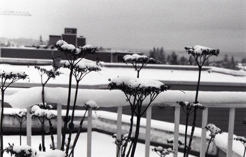 Snow Leica 35mm