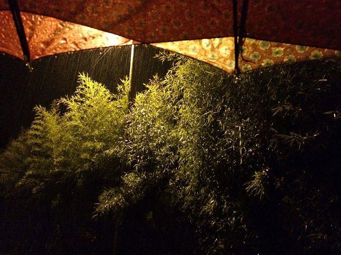 Raindrops Rainy Night On The Rain The Purist (no Edit, No Filter) Nightphotography Night Lights