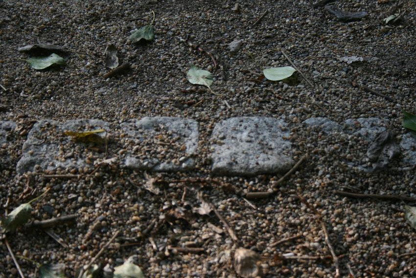 Broken Change Cobblestone Dirty Dry Floor Ground Leaf Rough
