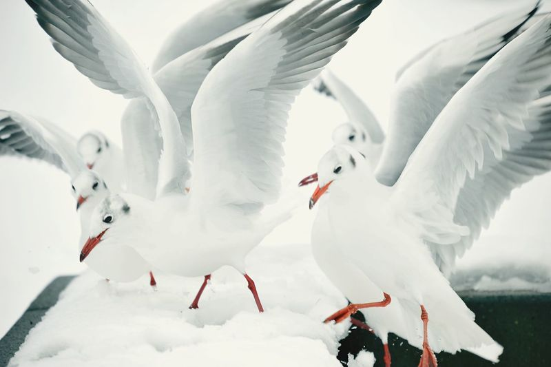 EyeEm Best Shots Cold Temperature Winter Snow White Color Nature Day Animal Bird Frozen Flying
