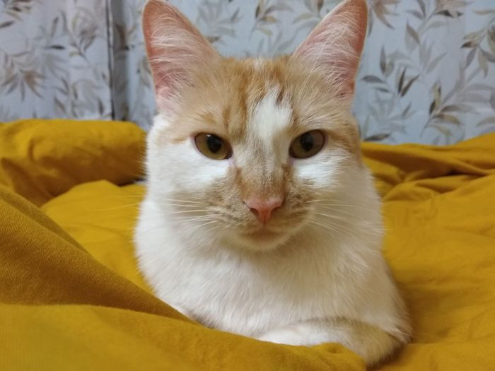 Portrait of cat relaxing on bed