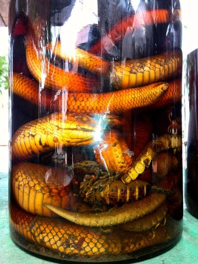 Laos, Luang Prabang Snake Wine