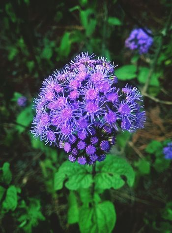 Plant Nature Wildflowers Macro Photography Landscape Atlanta Rual First Eyeem Photo