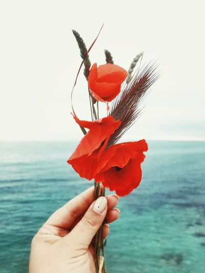 Cropped Hand Of Woman Holding Red Poppies Against Sea