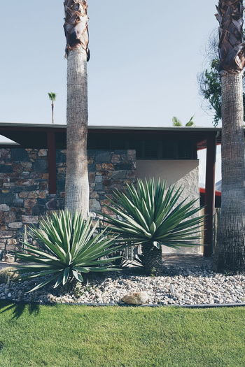 Palm Springs California California Dreaming Plants Retro Styled Lifestyle Mid Century Modern Mid Century Architecture The Essence Of Summer
