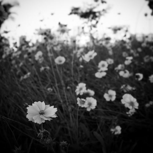 HiFiPhotographia HIFiClaudioVRocha Blackandwhitephotography Blancoynegro Pretoebranco Blackandwhite Noiretblanc 39