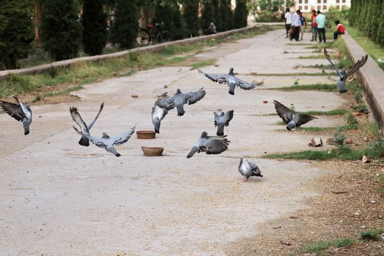 Pigions Rush Fly Canon18-135 Eyemphotography Canon Eos  EyeEm Gallery Canon80d Amritsar Sunnyday☀️ Outdoors Canonphotography FREE TO FLY The Week On EyeEm