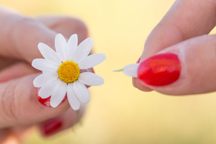 He Love me He Love me not Beauty In Nature Chamomilla Close-up Daisy Flower Daisy 🌼 Day Flower Flower Head Fragility Freshness Holding Human Body Part Human Finger Human Hand Love Me Love Me Not Nails Nature One Person Outdoors People Petal Red Red Nails Women Yellow