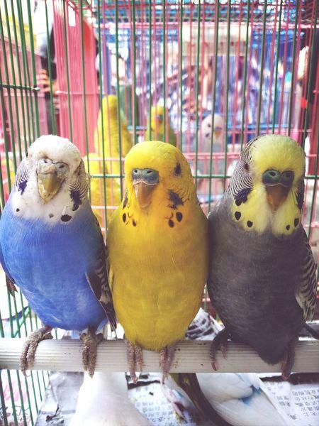 Good Morning Love Birds Sunday
