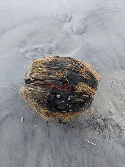 Beach Sand