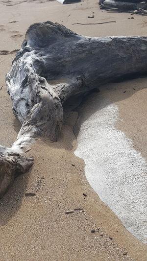 Beach Sand Driftwood Close-up Outdoors Lydgate Beach Kauai Life Beauty In Nature