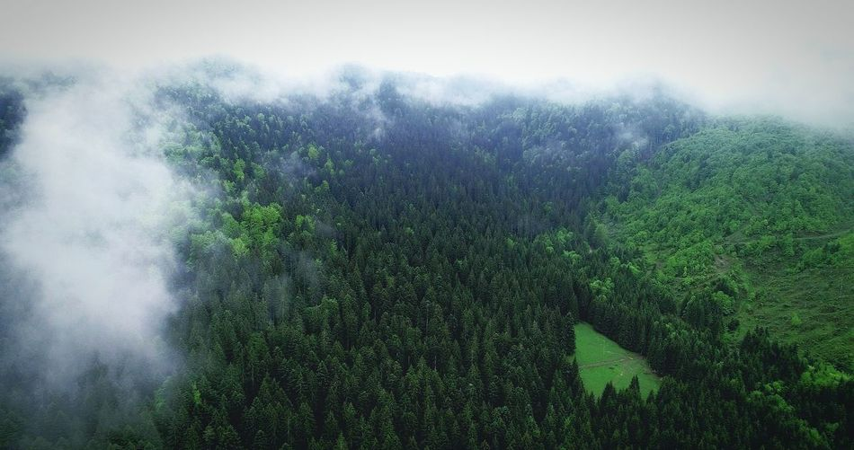 Aerial Photography Picea Abies Aerial View Summer Exploratorium Aerial Shot EyeEm Forest Photography Nature Photography EyeEmNewHere Water Spraying Motion Full Frame Pixelated Drop Close-up Rainfall Under Rainy Season Condensation Weather Splashing Droplet Torrential Rain