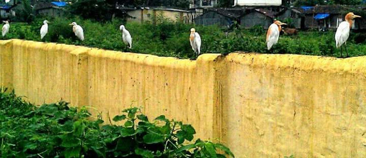 Kranes Bird Photography Birds Of EyeEm  Paint The Town Yellow