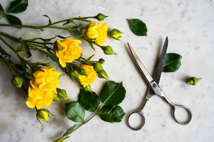 Yellow roses on scissors on a marble background Background Close-up Day Flower Flower Head Fragility Freshness Green Color Healthy Eating High Angle View Indoors  Leaf Marble, Metal No People Plant Roses Scissors Table Table Setting Yellow