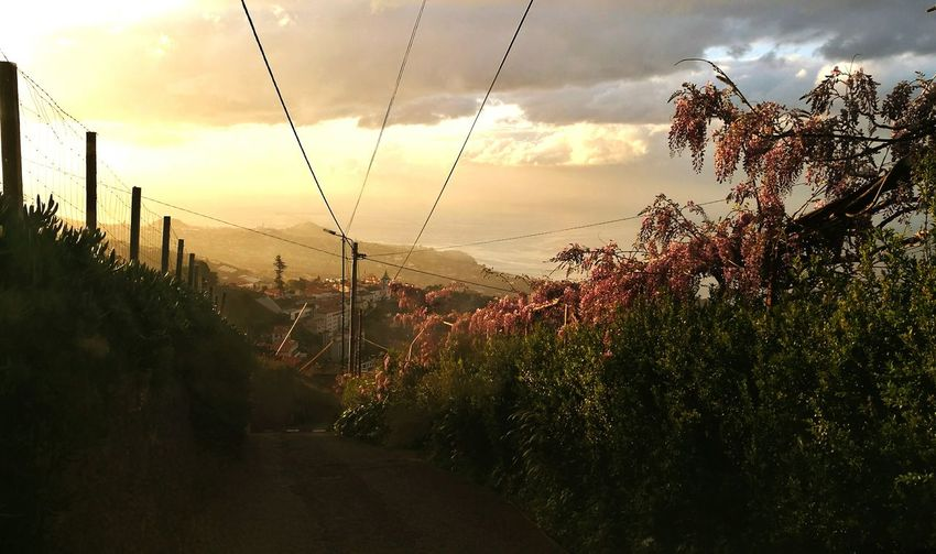 Primavera Sombria