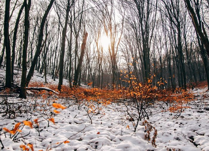 Hungary Bare Tree Beauty In Nature Cold Temperature Forest Nature_collection Nature_perfection Naturelovers Scenics Snow Sunlight Sunshine Tranquil Scene Tranquility Winter